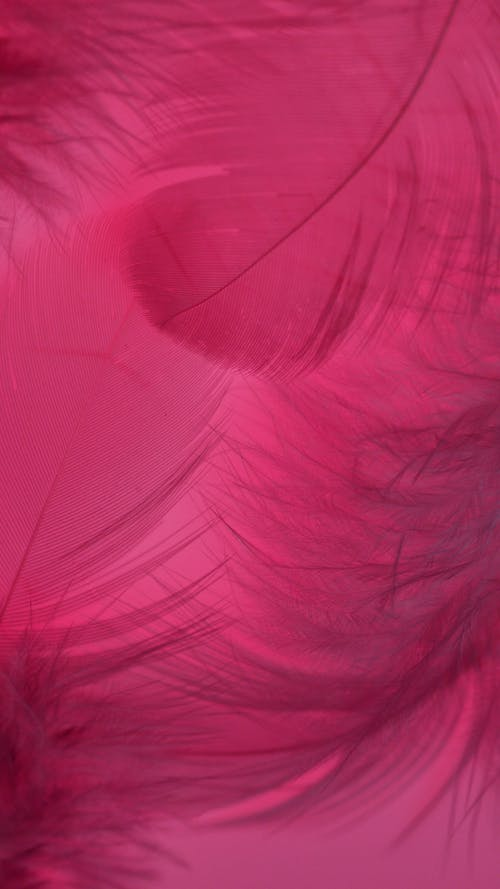 Pink Textile in Close Up Image