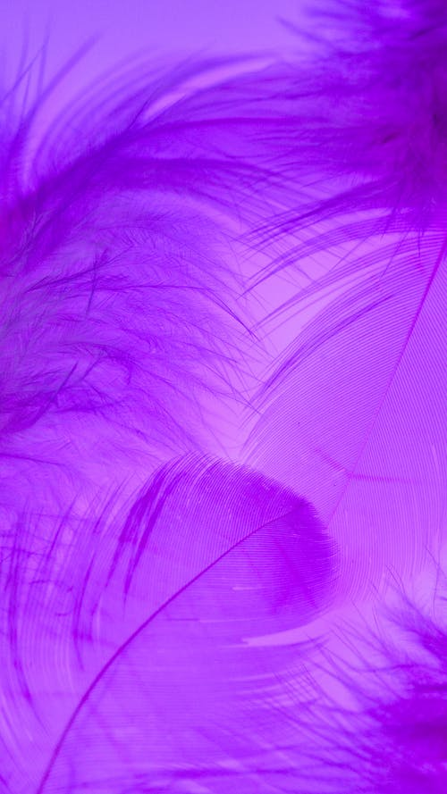 Purple and Blue Feather Illustration