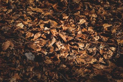 Dry autumn fallen on ground in park