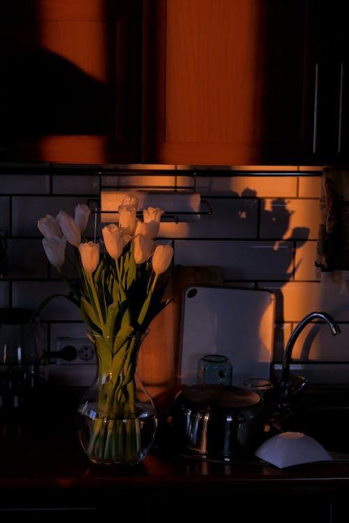Tender tulips in vase in dark room