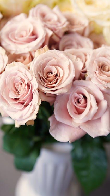Bunch of fragrant gentle pink roses in white ceramic vase in light room
