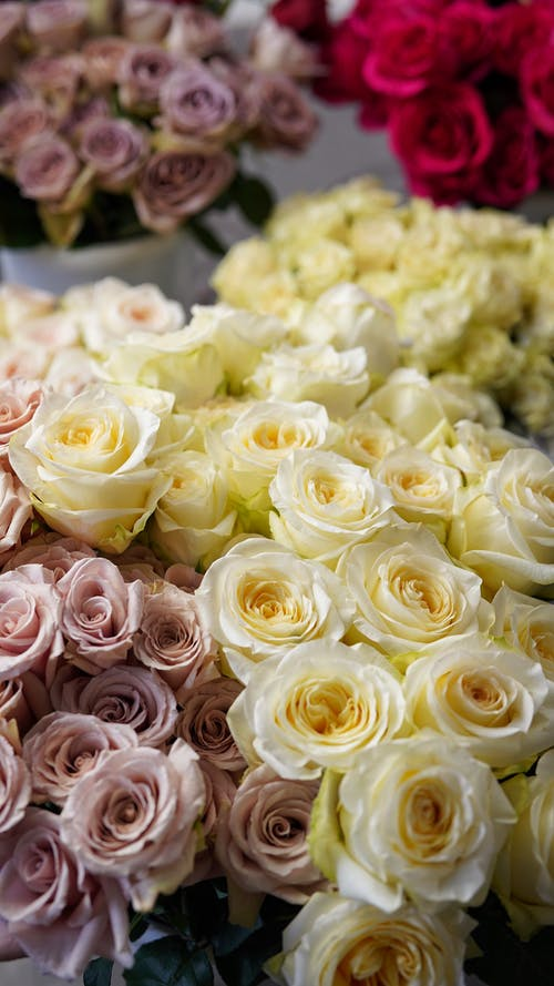 Bunches of blooming aromatic roses of different colors presented in light floristry shop