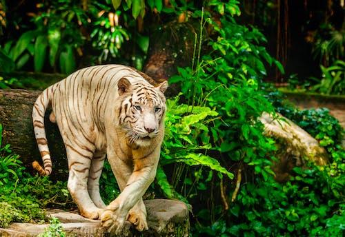 Immagine gratuita di albino, animale, cacciatore