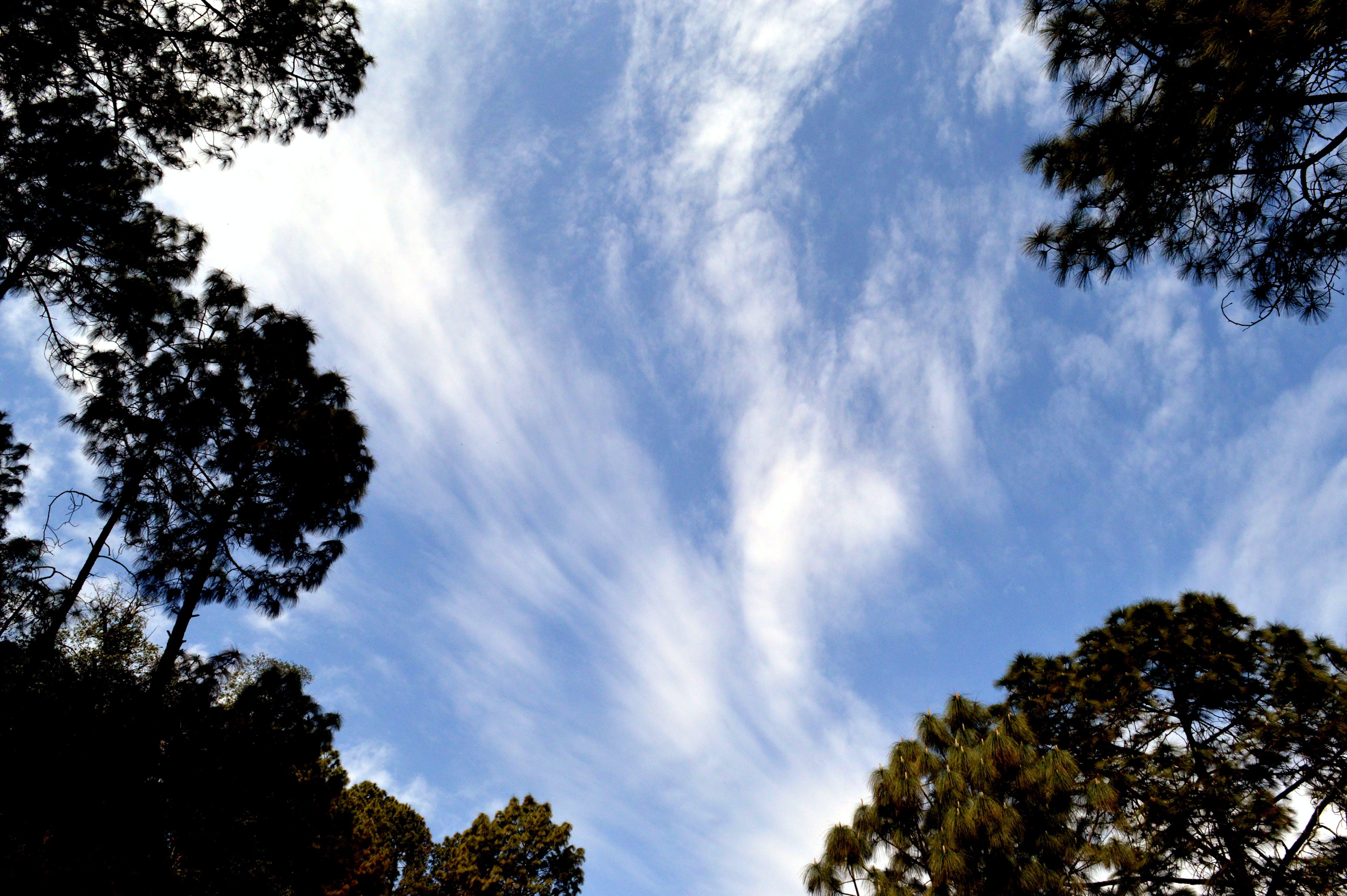 パーク, 光, 天気, 日光の無料の写真素材