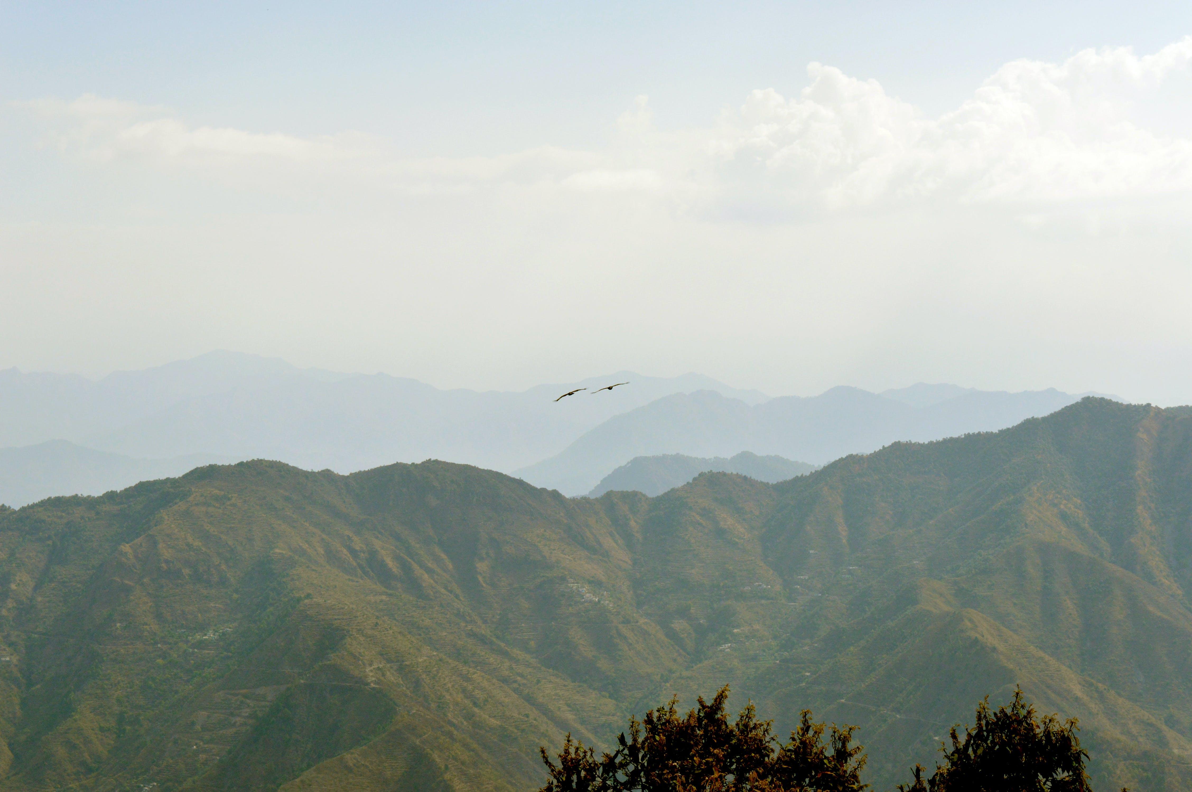 Free stock photo of mountains, eagle