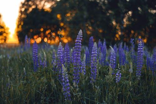 Immagine gratuita di alberi, ambiente, campo, concentrarsi