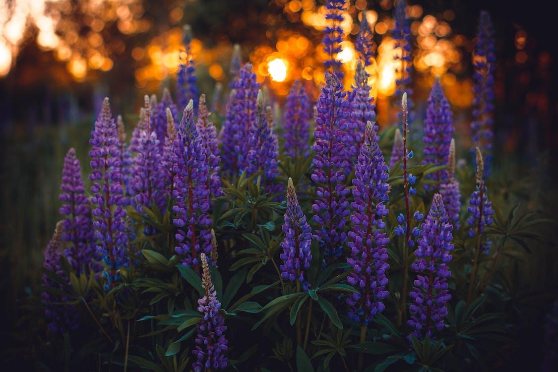 blommor, fält, flora