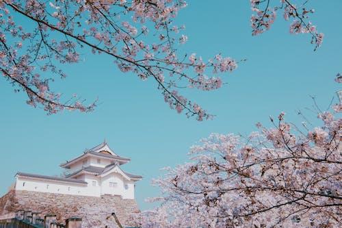 Immagine gratuita di albero, architettura, azzurro