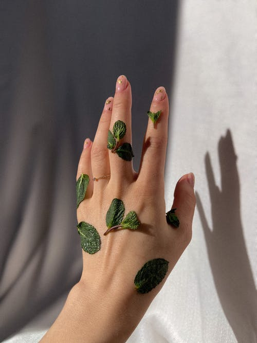 Crop woman with green leaves on hand