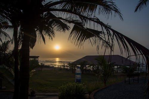 Základová fotografie zdarma na téma Afrika, moře, palma, palmové listy