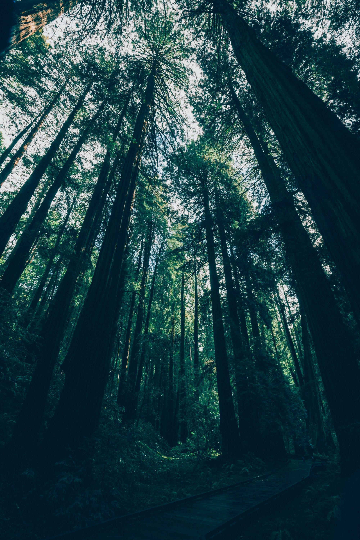 Ingyenes stockfotó erdő, fa, fák, fény témában