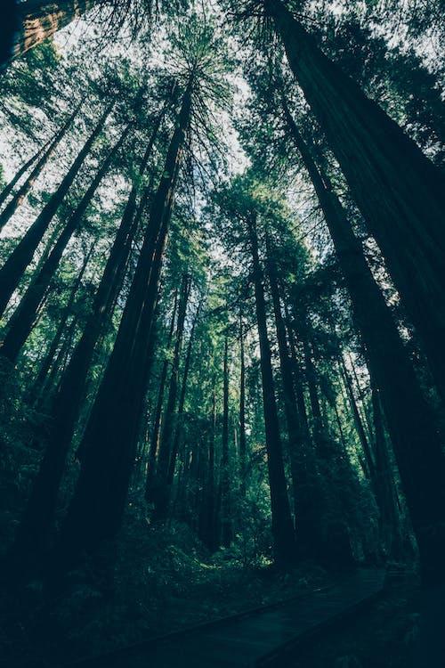 Foto d'estoc gratuïta de aigua, arbres, bagul, bosc