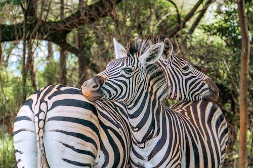 アフリカ, エキゾチック, エトーシャの無料の写真素材