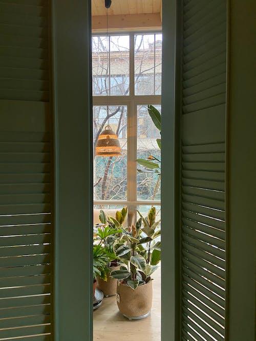 Potted plants on light room
