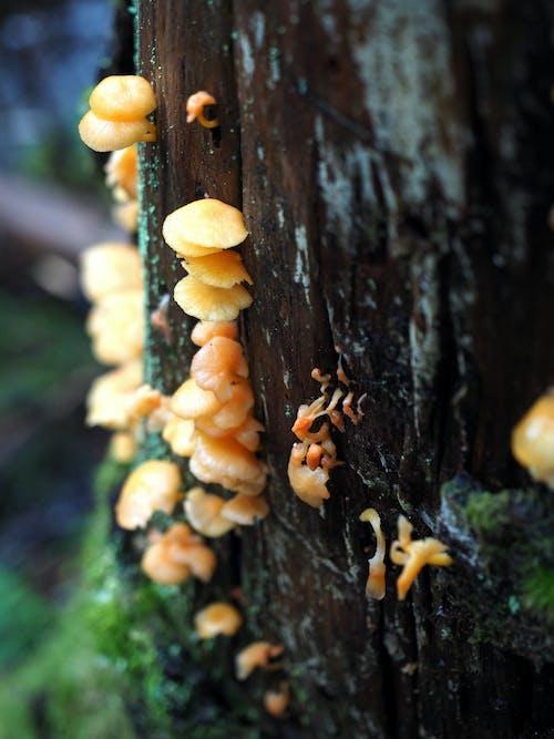 Gratis lagerfoto af bio, liv, skov, svampe