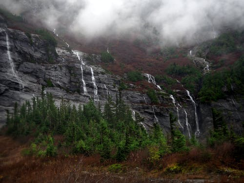 Gratis lagerfoto af bjerg, mut, pnw, skov