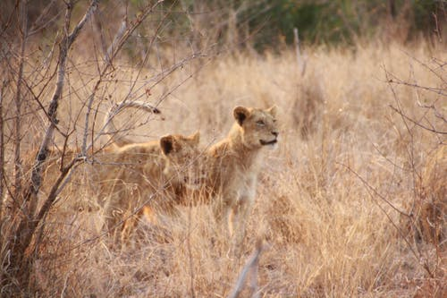 Free stock photo of africa, animals, animals in wild