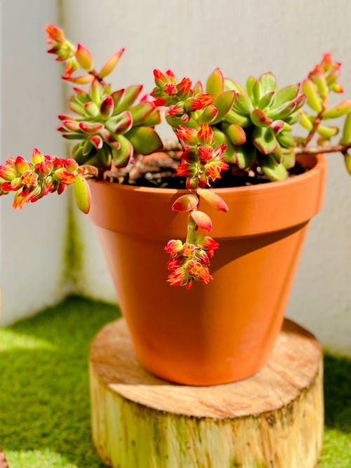 Green and Pink Flower in Brown Clay Pot