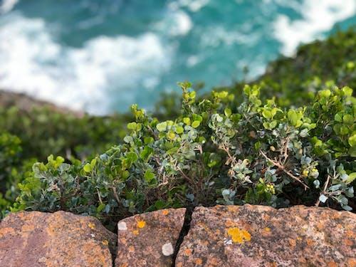 Free stock photo of close up, coastal landscape