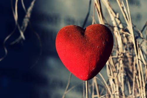 オーナメント, デコレーション, 心臓の無料の写真素材
