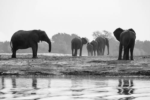 Free stock photo of africa, animals in the wild, elephants