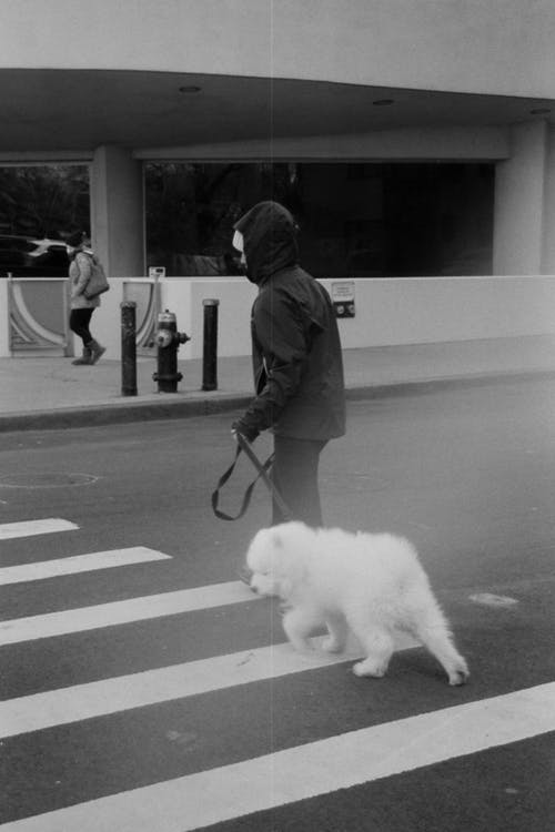 Man in Gray Jacket Walking With White Dog on Street