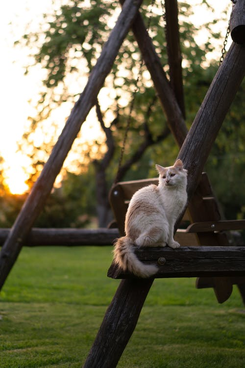 White Cat Sitting on Brown Wooden Bench
