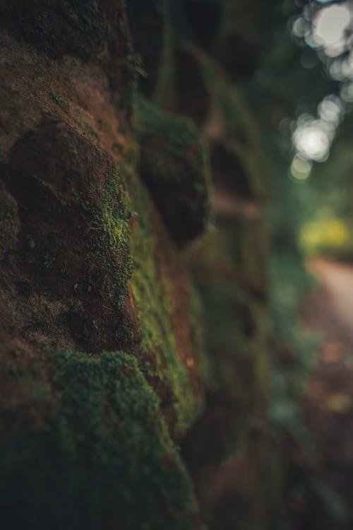Ingyenes stockfotó faragott kövek, piedras témában