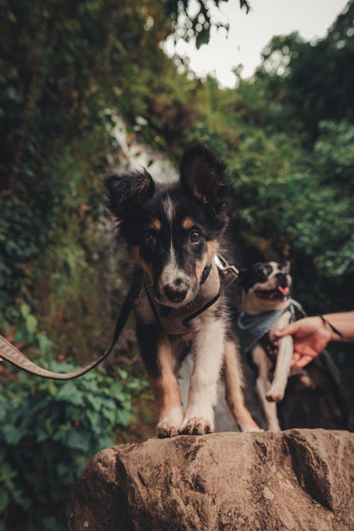 Ingyenes stockfotó kutyák témában
