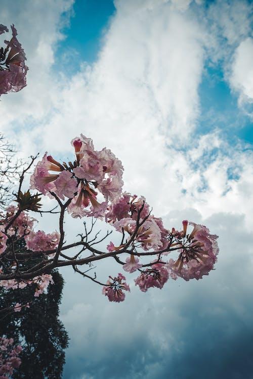 Ingyenes stockfotó aire, cielo, rózsa témában
