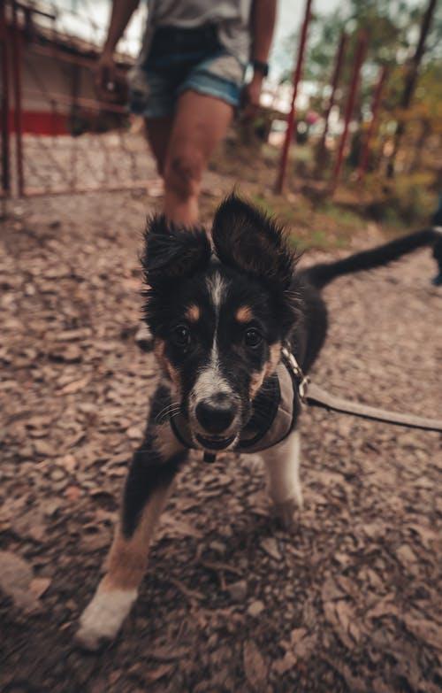 Ingyenes stockfotó cachorro, kölyökkutya, roma témában