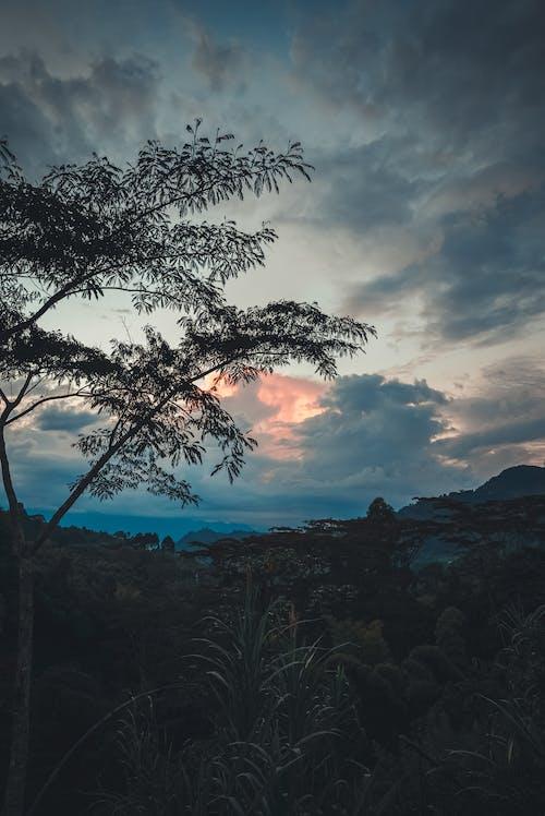 Ingyenes stockfotó atardecer, colombia, jardin témában