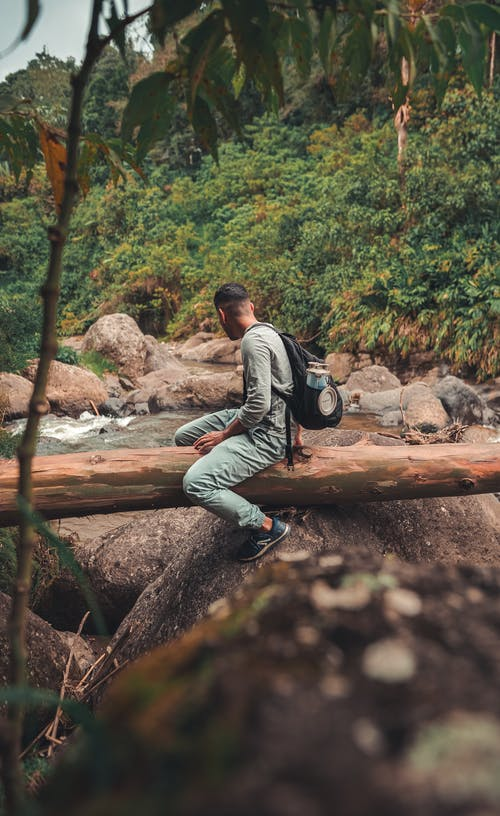 Ingyenes stockfotó aventura, jardin, rio témában
