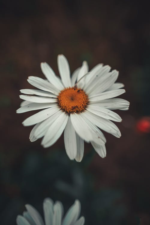 Ingyenes stockfotó fényes, flor, fű témában