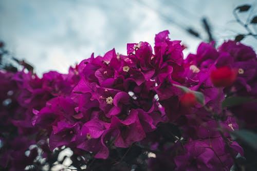 Ingyenes stockfotó colombia, medellin, virágok témában