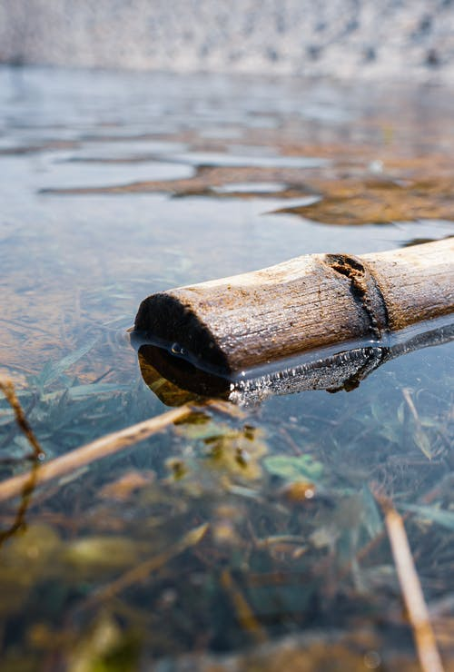 Free stock photo of bamboo, calm water