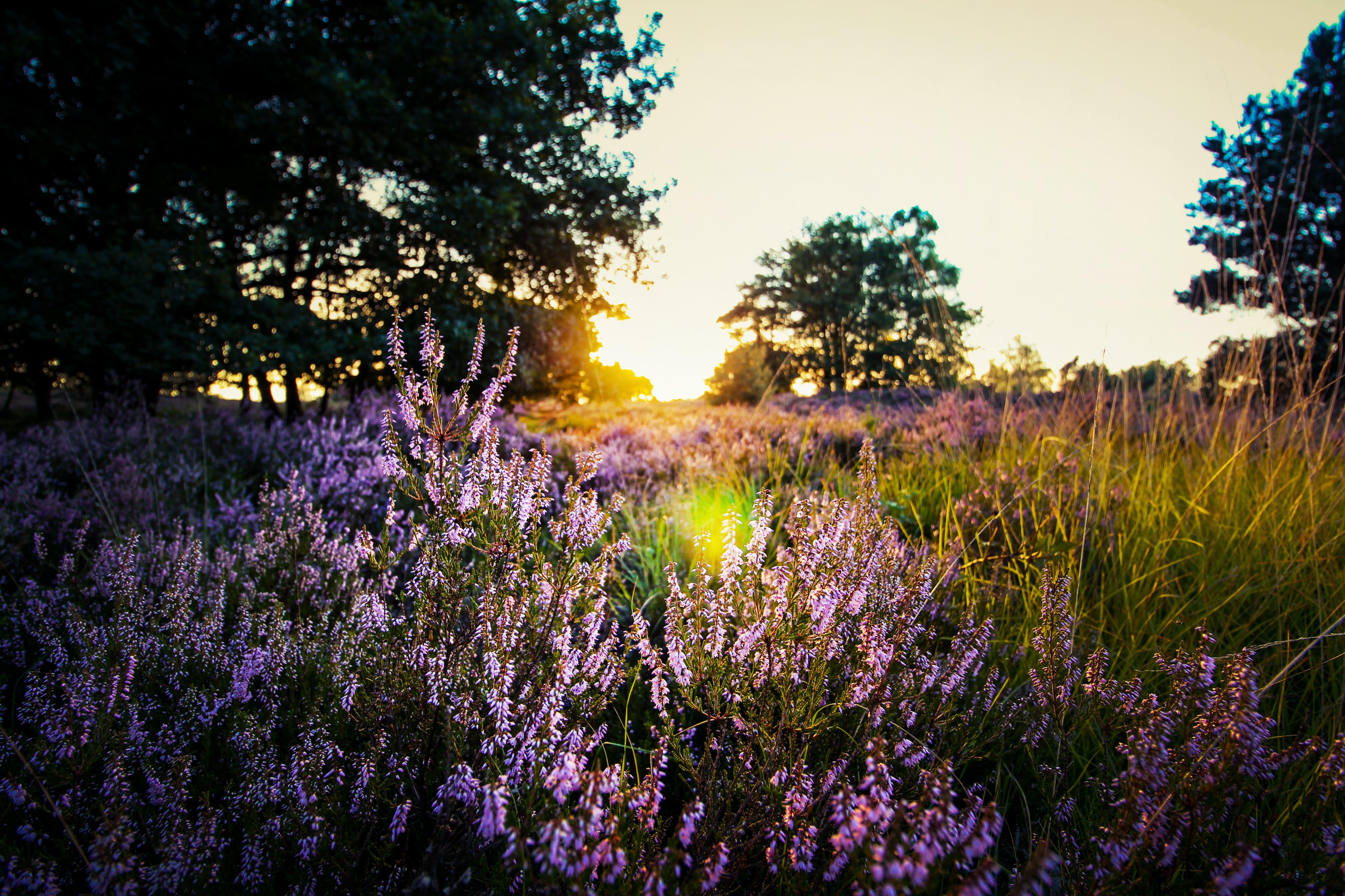 Foto stok gratis alam, berbayang, berbunga, bidang