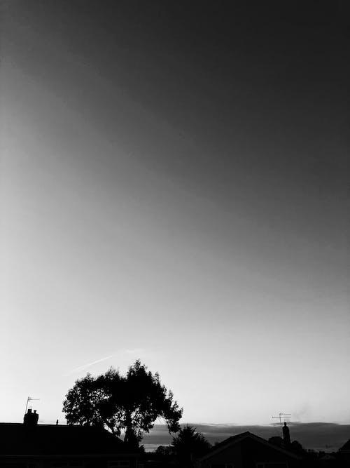 Free stock photo of art, black and white, dark