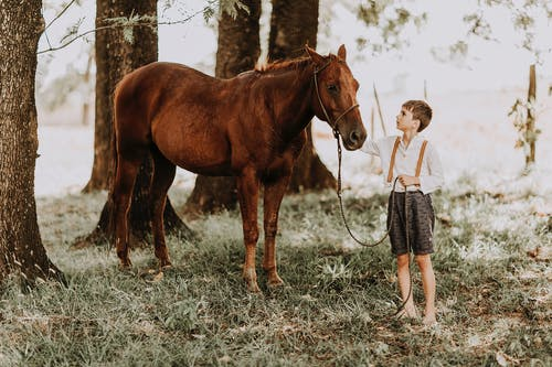 Calm child stroking horse in green woods