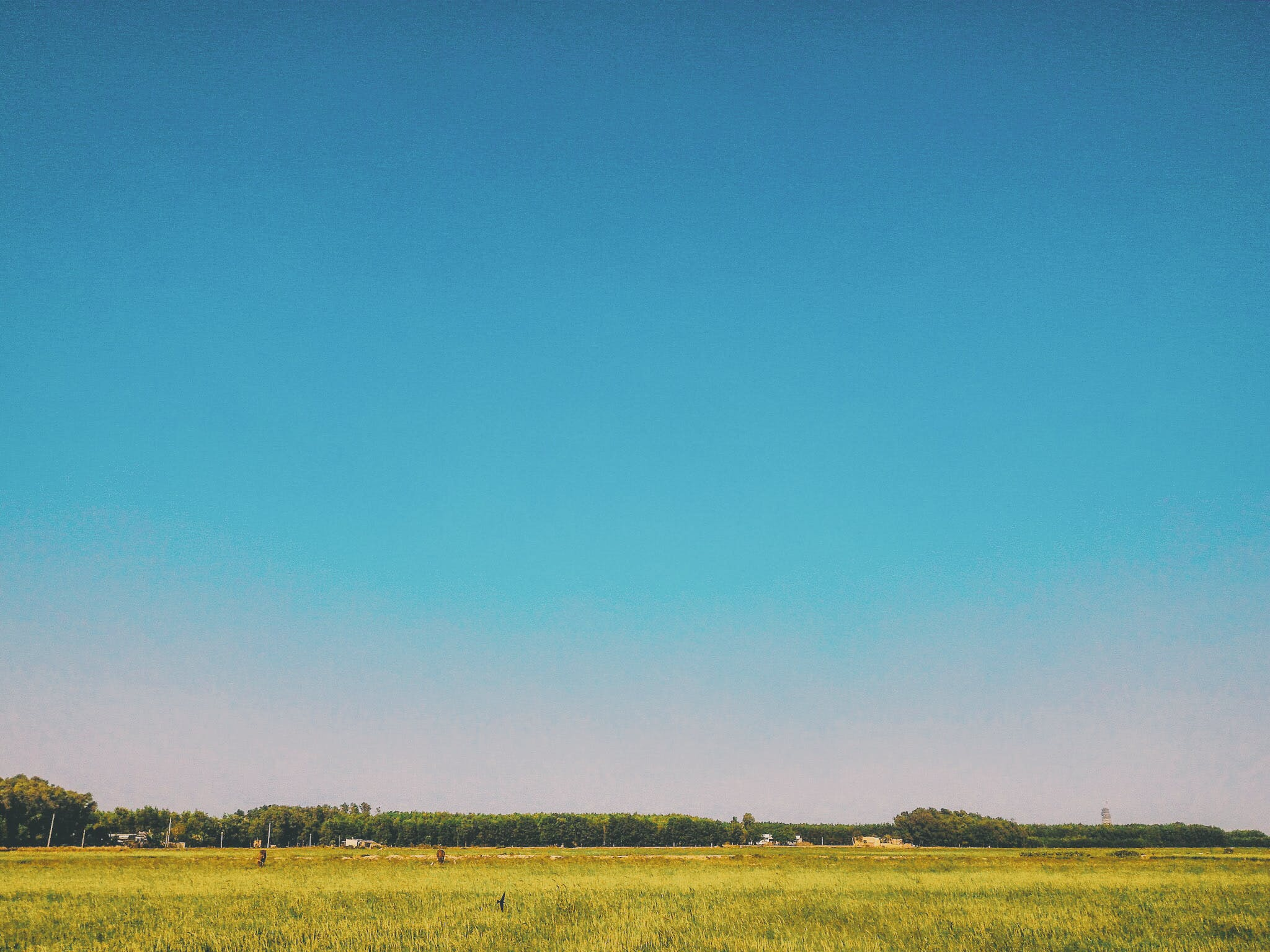 Grass Field Under Blue Sky at Daytime