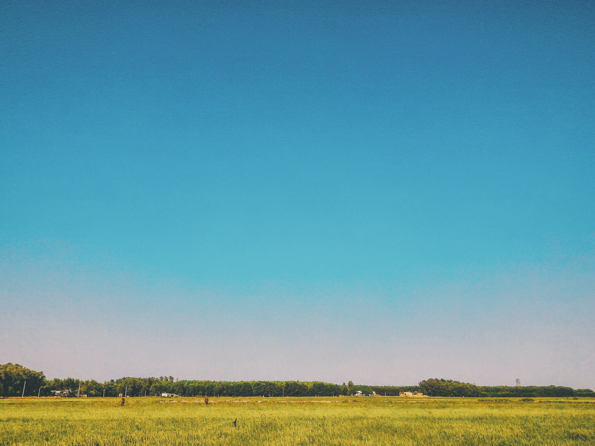 grass field under blue sky at daytime free stock photo