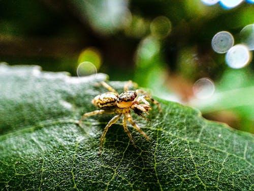 거미, 거미류, 곤충, 동물의 무료 스톡 사진