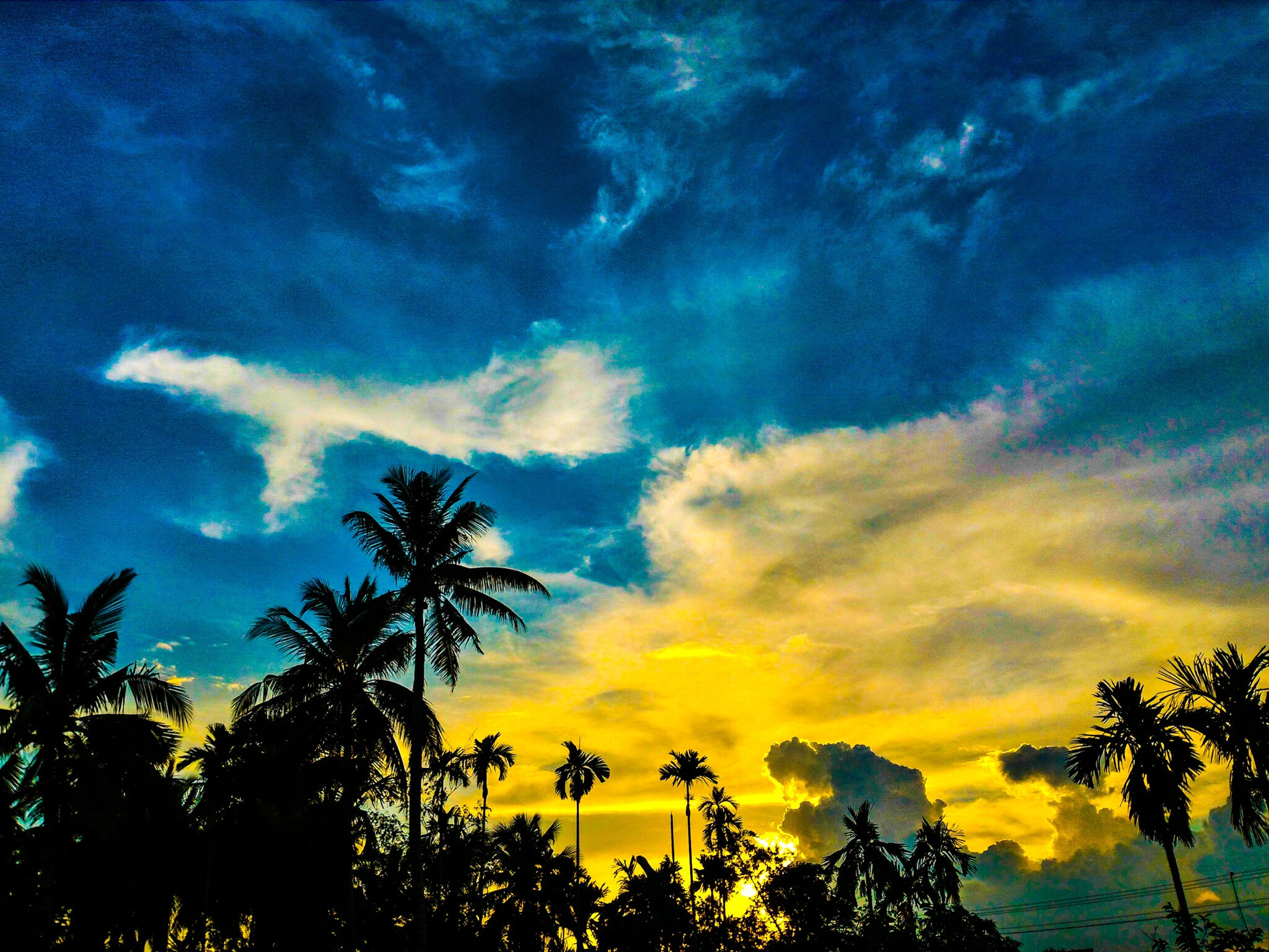 silhouette of palm trees under blue and yellow sky free stock photo