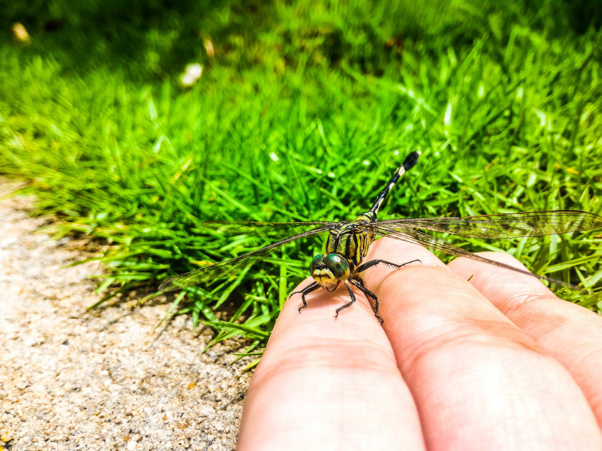 Closeup Photography of Person Handling Green Dragonfly