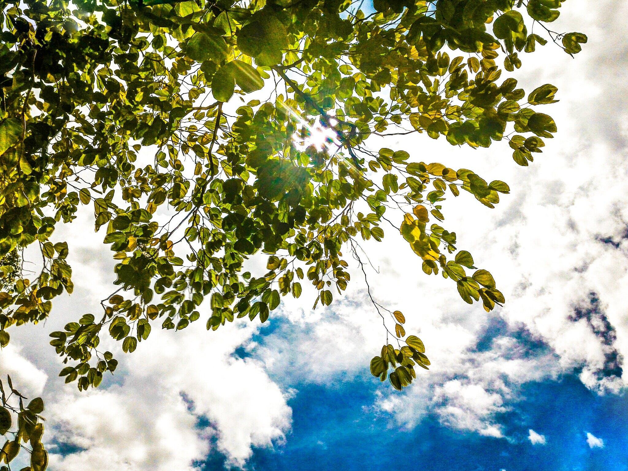 alegre, árvore, aumento