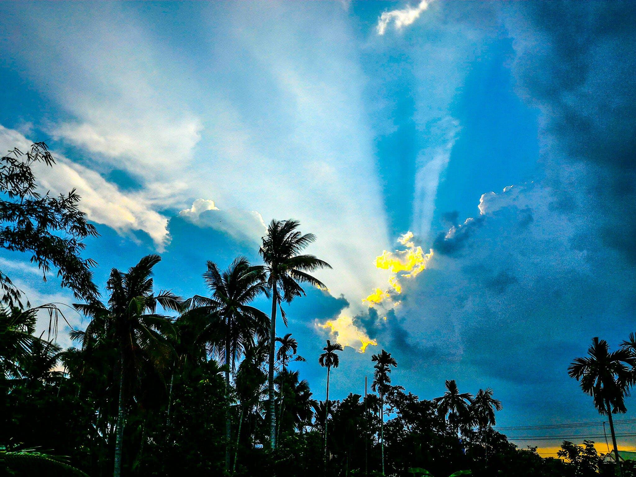 ココナッツの木, トロピカル, 光, 夏の無料の写真素材