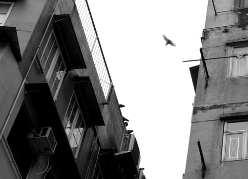 Grayscale Photo of Bird Flying on Mid Air