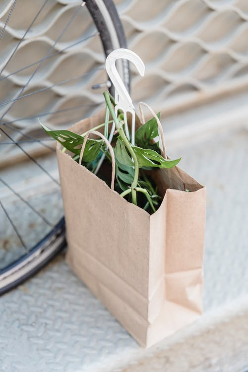 From above of fresh potted plant in kraft paper bag placed on step on city street on sunny day