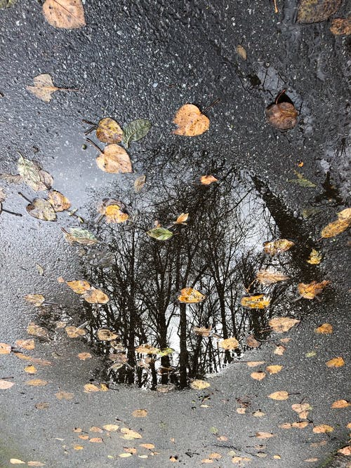 Free stock photo of puddle, reflection, trees