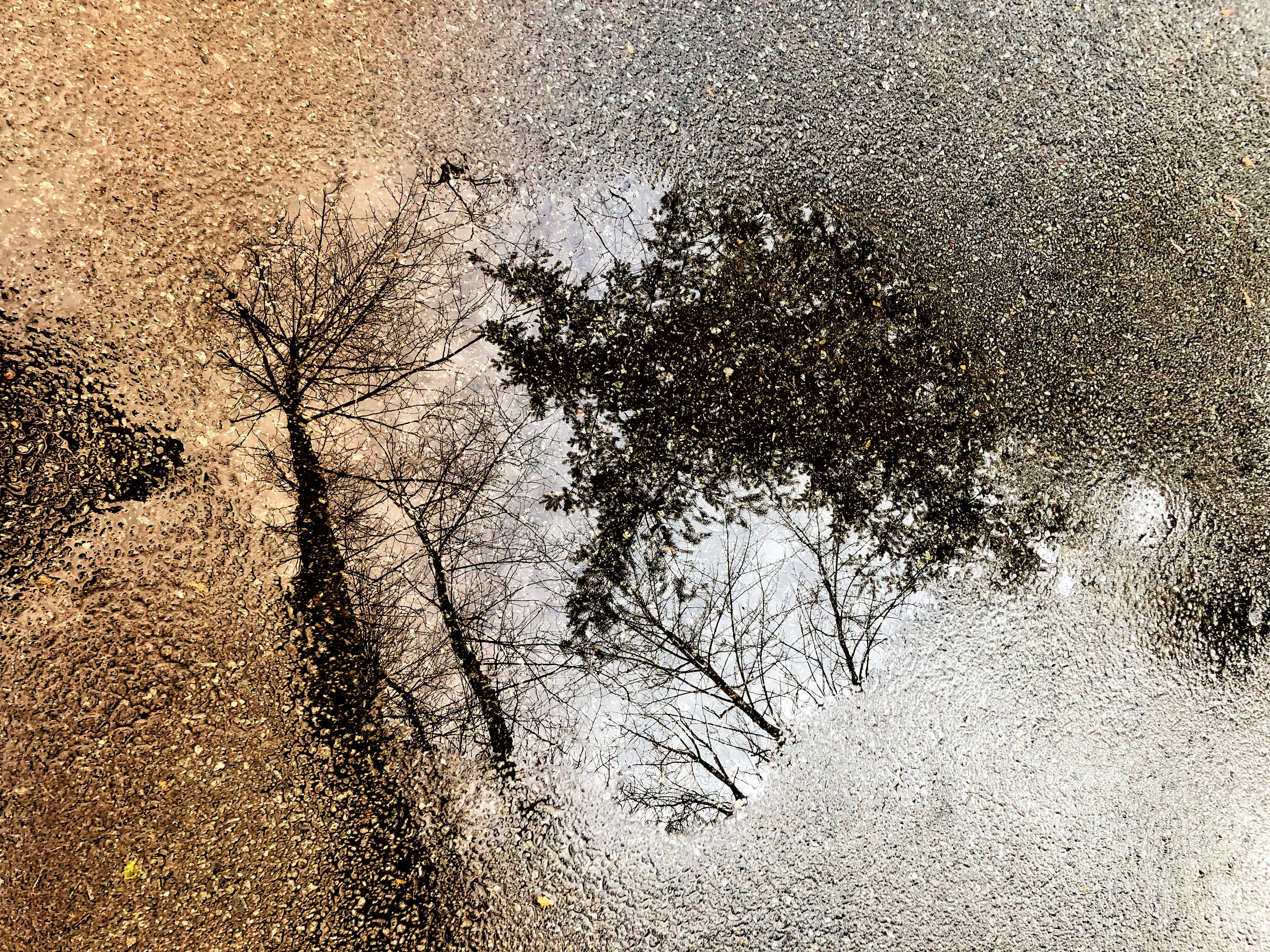 Free stock photo of abstract, puddle, reflections, trees